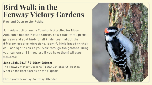 Bird walk in the Fenway Victory Gardens (1)